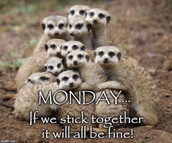 MONDAY... If we stick together it will all be fine! | image tagged in meerkat monday | made w/ Imgflip meme maker