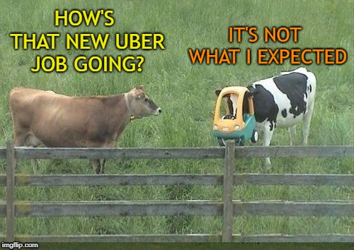 Side Job | HOW'S THAT NEW UBER JOB GOING? IT'S NOT WHAT I EXPECTED | image tagged in funny memes,memes,cow,animals,uber,taxi driver | made w/ Imgflip meme maker