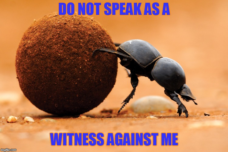 Inscription on Scarab amulets in ancient Egypt. | DO NOT SPEAK AS A WITNESS AGAINST ME | image tagged in dung beetle,kephra,magick,protection | made w/ Imgflip meme maker