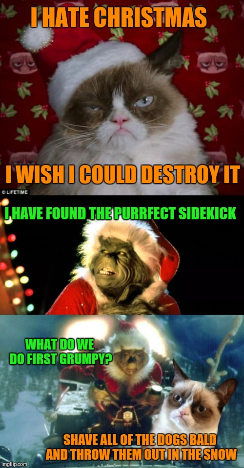 The Grinch Meets Grumpy Cat.... How The Grinch Stole Christmas Week. Dec 9th - Dec 14th (A 44colt event) | I HATE CHRISTMAS I WISH I COULD DESTROY IT I HAVE FOUND THE PURRFECT SIDEKICK WHAT DO WE DO FIRST GRUMPY? SHAVE ALL OF THE DOGS BALD AND THR | image tagged in grumpy cat christmas,funny,the grinch,how the grinch stole christmas week,memes,44colt | made w/ Imgflip meme maker