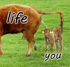 you life | image tagged in funny,funny animals,animals,memes | made w/ Imgflip meme maker