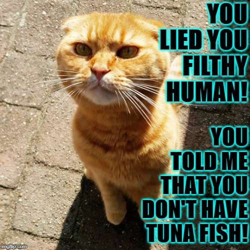 YOU LIED | YOU LIED YOU FILTHY HUMAN! YOU TOLD ME THAT YOU DON'T HAVE TUNA FISH! | image tagged in you lied | made w/ Imgflip meme maker