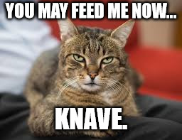 Catitude. | YOU MAY FEED ME NOW... KNAVE. | image tagged in cat | made w/ Imgflip meme maker