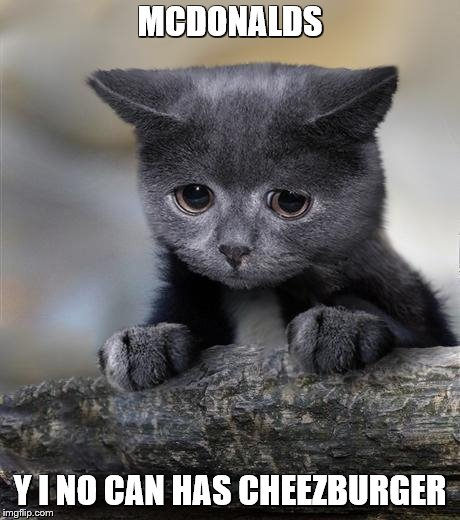 Confession Cat | MCDONALDS Y I NO CAN HAS CHEEZBURGER | image tagged in confession cat | made w/ Imgflip meme maker