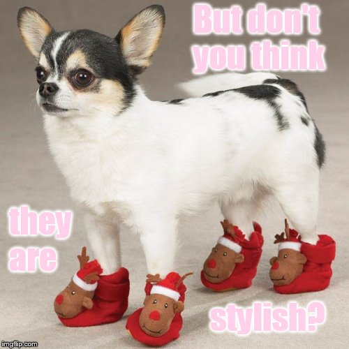 But don't you think stylish? they are | made w/ Imgflip meme maker
