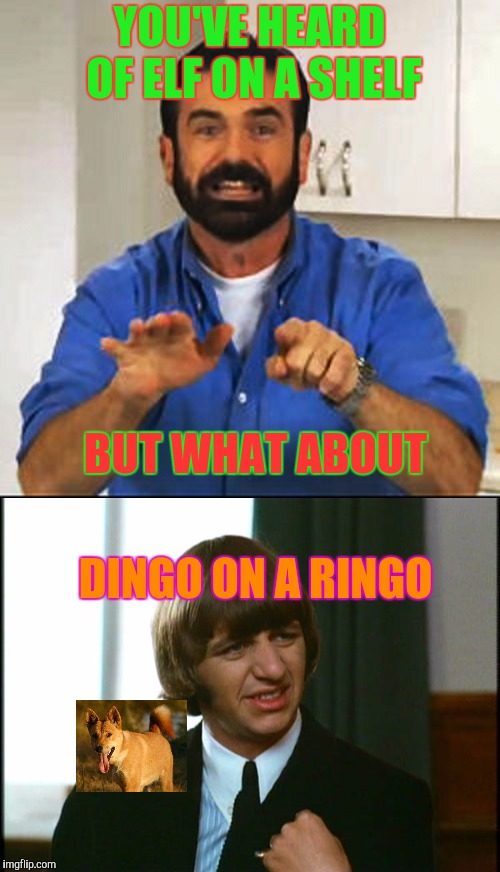 Inspired by Snoop on a Stoop | YOU'VE HEARD OF ELF ON A SHELF BUT WHAT ABOUT DINGO ON A RINGO | image tagged in billy mays,ringo starr,dingo,elf on a shelf,the beatles | made w/ Imgflip meme maker