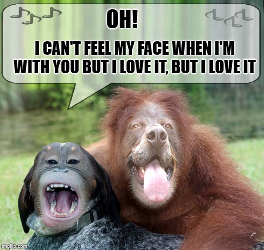 Silly | OH! I CAN'T FEEL MY FACE WHEN I'M WITH YOU BUT I LOVE IT, BUT I LOVE IT | image tagged in face swap,funny meme | made w/ Imgflip meme maker