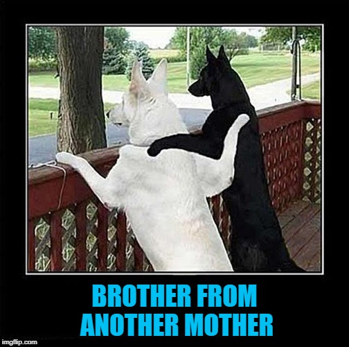 BROTHER FROM ANOTHER MOTHER | made w/ Imgflip meme maker