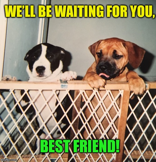 WE'LL BE WAITING FOR YOU, BEST FRIEND! | made w/ Imgflip meme maker
