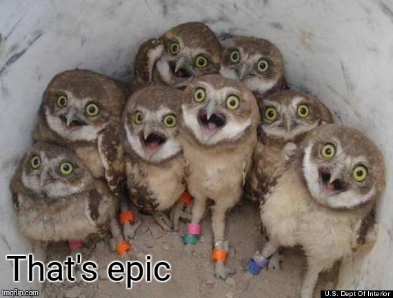 Amazed Owls | That's epic | image tagged in amazed owls | made w/ Imgflip meme maker