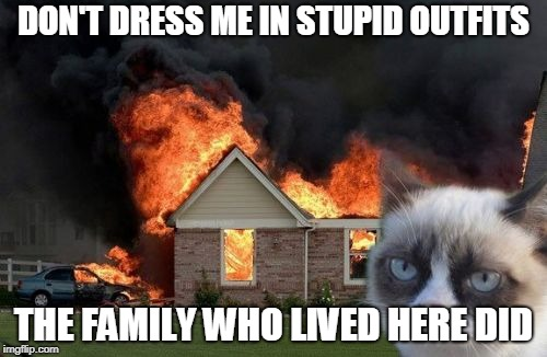 Animal suits |  DON'T DRESS ME IN STUPID OUTFITS; THE FAMILY WHO LIVED HERE DID | image tagged in memes,burn kitty,grumpy cat | made w/ Imgflip meme maker