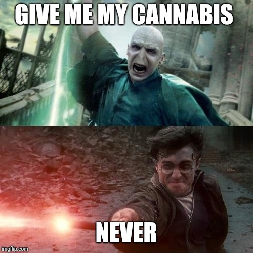 Harry Potter meme | GIVE ME MY CANNABIS NEVER | image tagged in harry potter meme | made w/ Imgflip meme maker