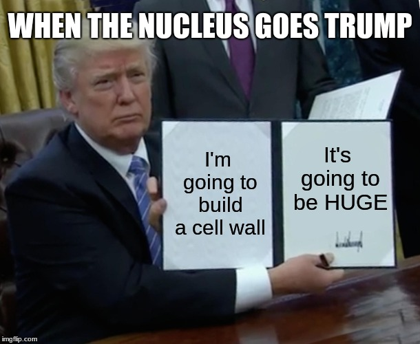 teeeeeeeehehhheeeeeee | I'm going to build a cell wall It's going to be HUGE WHEN THE NUCLEUS GOES TRUMP | image tagged in memes,trump bill signing | made w/ Imgflip meme maker