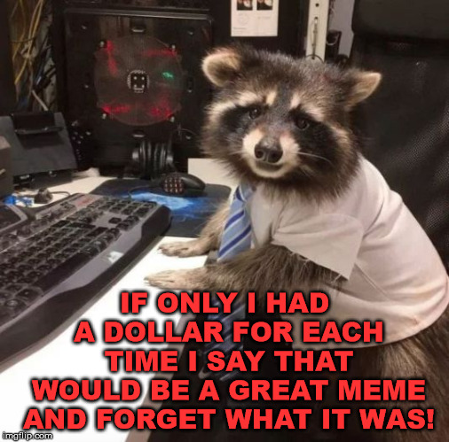 Racoon | IF ONLY I HAD A DOLLAR FOR EACH TIME I SAY THAT WOULD BE A GREAT MEME AND FORGET WHAT IT WAS! | image tagged in racoon | made w/ Imgflip meme maker