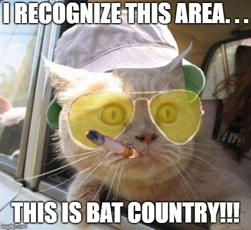Fear And Loathing Cat | I RECOGNIZE THIS AREA. . . THIS IS BAT COUNTRY!!! | image tagged in memes,fear and loathing cat | made w/ Imgflip meme maker