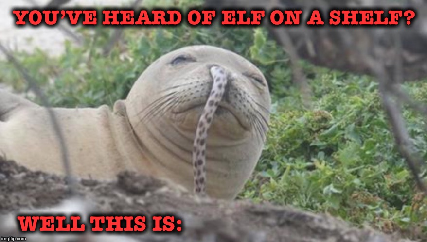Ouch! | YOU'VE HEARD OF ELF ON A SHELF? WELL THIS IS: | image tagged in elf on a shelf,eel on a seal | made w/ Imgflip meme maker