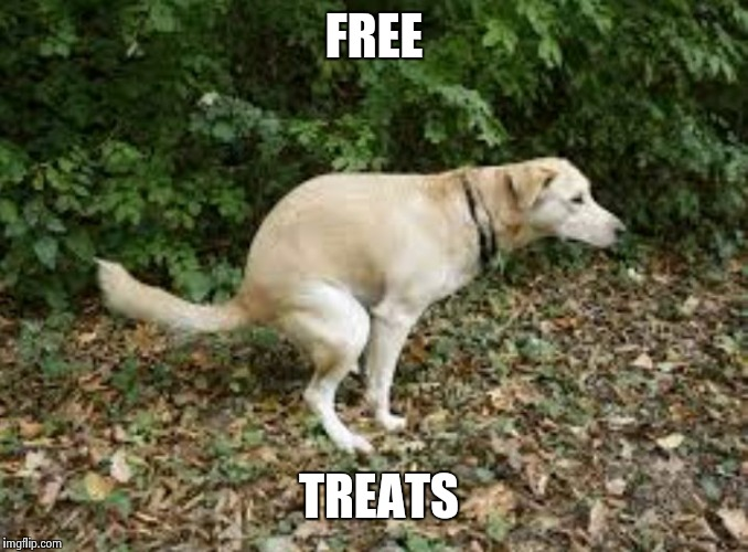 Dog pooping  | FREE TREATS | image tagged in dog pooping | made w/ Imgflip meme maker