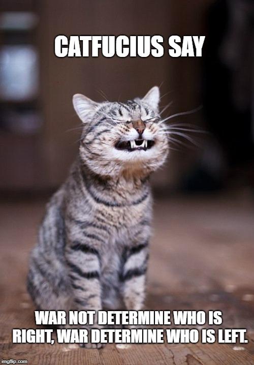 Funny Cat Memes funny cat memes...