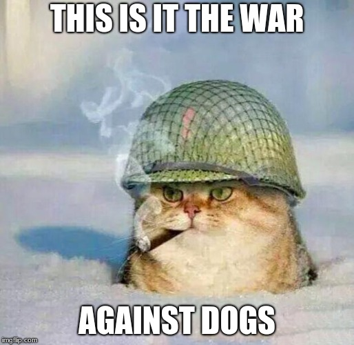 War Cat | THIS IS IT THE WAR AGAINST DOGS | image tagged in war cat | made w/ Imgflip meme maker