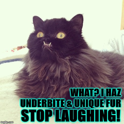 WHAT? | WHAT? I HAZ UNDERBITE & UNIQUE FUR STOP LAUGHING! | image tagged in what | made w/ Imgflip meme maker
