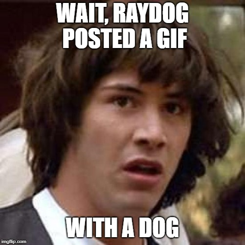 WAIT, RAYDOG POSTED A GIF WITH A DOG | image tagged in memes,conspiracy keanu | made w/ Imgflip meme maker