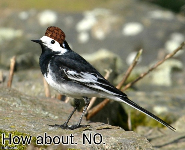 Savage Pied Wagtail | How about. NO. | image tagged in savage pied wagtail,scumbag | made w/ Imgflip meme maker