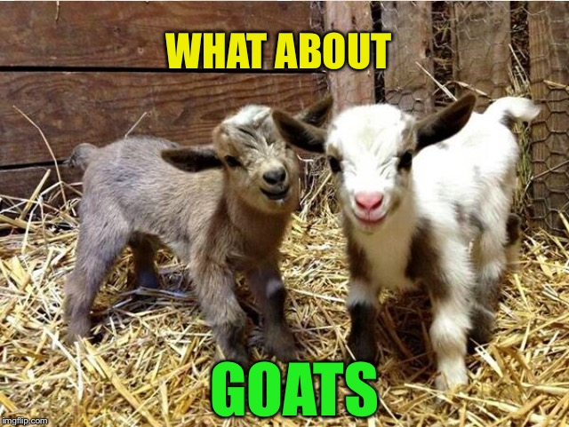 WHAT ABOUT GOATS | made w/ Imgflip meme maker