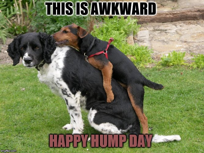happy hump day | THIS IS AWKWARD HAPPY HUMP DAY | image tagged in this is awkward,hump day,happy hump day,memes,meme,funny | made w/ Imgflip meme maker