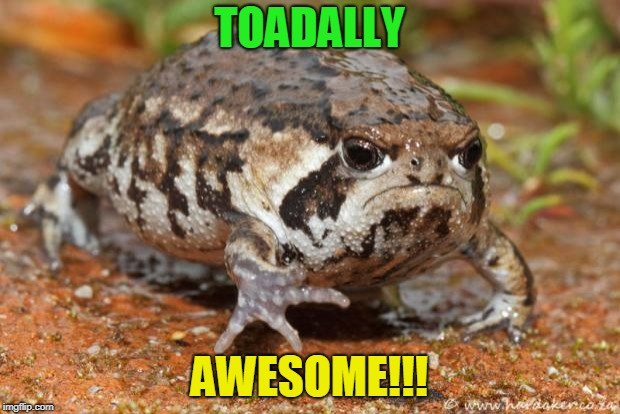 Grumpy Toad | TOADALLY AWESOME!!! | image tagged in memes,grumpy toad | made w/ Imgflip meme maker