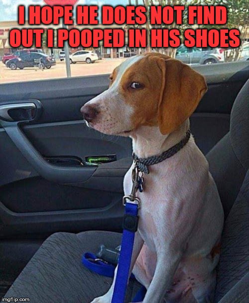 car dog | I HOPE HE DOES NOT FIND OUT I POOPED IN HIS SHOES | image tagged in car dog | made w/ Imgflip meme maker