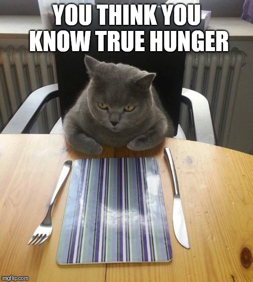 Hungry Cat Etiquette | YOU THINK YOU KNOW TRUE HUNGER | image tagged in hungry cat etiquette | made w/ Imgflip meme maker