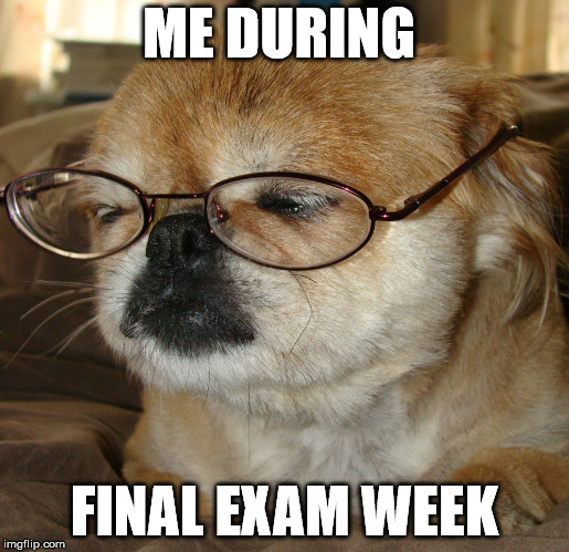 Sleep Like a Dog | ME DURING FINAL EXAM WEEK | image tagged in finals,finals week,exams,school,dog | made w/ Imgflip meme maker