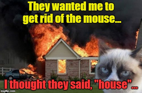 "Burn Kitty | They wanted me to get rid of the mouse... I thought they said, ""house""... 