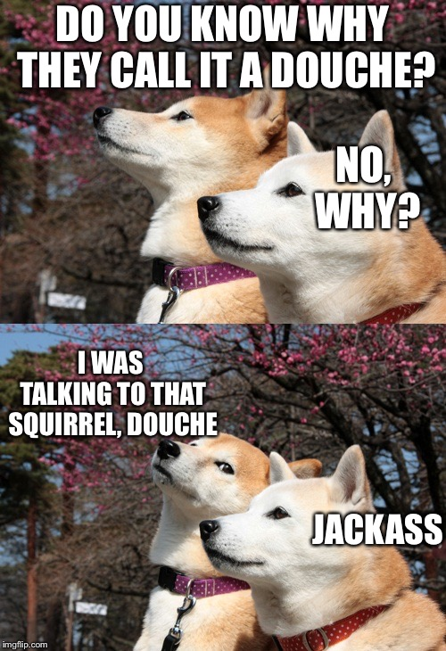 Bad pun dogs | DO YOU KNOW WHY THEY CALL IT A DOUCHE? I WAS TALKING TO THAT SQUIRREL, DOUCHE NO, WHY? JACKASS | image tagged in bad pun dogs | made w/ Imgflip meme maker