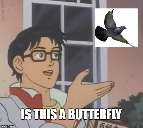 Is This A Butterfly? | IS THIS A BUTTERFLY | image tagged in memes,is this a pigeon,is this a butterfly,butt,mlgkewlman,he needs better glasses | made w/ Imgflip meme maker
