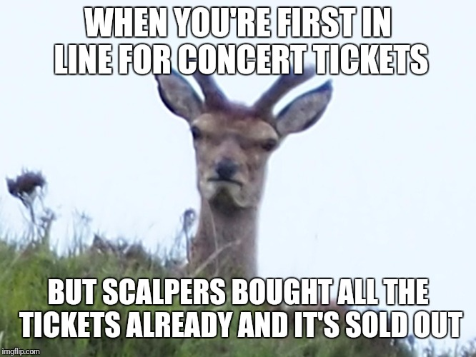 So now i'm paying $500 for $25 tickets in row 265 | WHEN YOU'RE FIRST IN LINE FOR CONCERT TICKETS BUT SCALPERS BOUGHT ALL THE TICKETS ALREADY AND IT'S SOLD OUT | image tagged in furious deer,concert,tickets,memes | made w/ Imgflip meme maker
