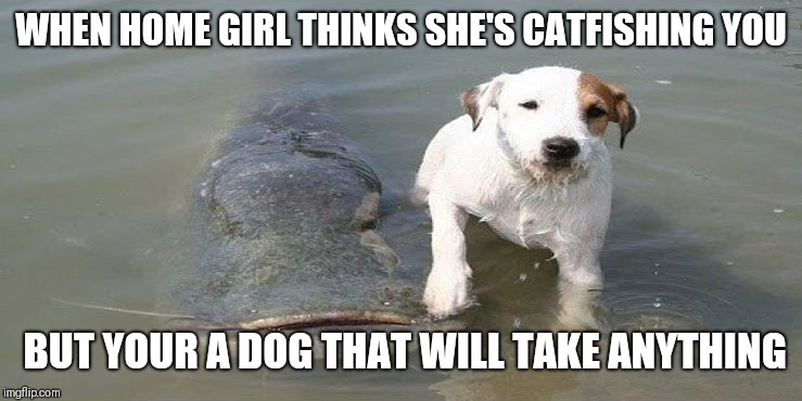 Uncatfishable | WHEN HOME GIRL THINKS SHE'S CATFISHING YOU BUT YOUR A DOG THAT WILL TAKE ANYTHING | image tagged in dogs,funny,funny animals,memes | made w/ Imgflip meme maker