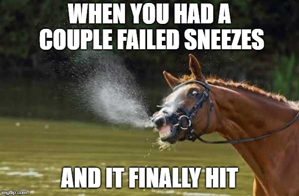 Sneeze level - full retard, Satisfaction level - oh yeah! | WHEN YOU HAD A COUPLE FAILED SNEEZES AND IT FINALLY HIT | image tagged in sneeze,lol,horse,horse face | made w/ Imgflip meme maker