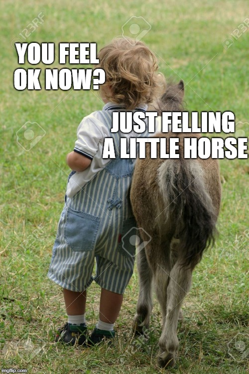 YOU FEEL OK NOW? JUST FELLING A LITTLE HORSE | made w/ Imgflip meme maker
