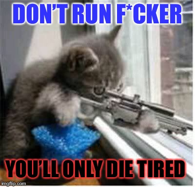 cats with guns | DON'T RUN F*CKER YOU'LL ONLY DIE TIRED | image tagged in cats with guns | made w/ Imgflip meme maker