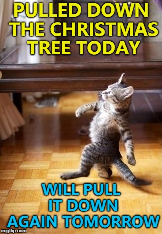It's good to have a plan... :) | PULLED DOWN THE CHRISTMAS TREE TODAY WILL PULL IT DOWN AGAIN TOMORROW | image tagged in memes,cool cat stroll,christmas | made w/ Imgflip meme maker