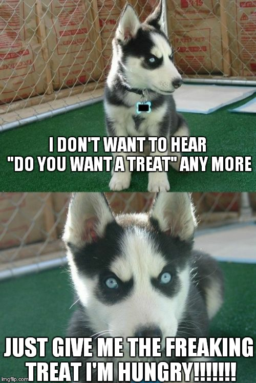 "Hungry pup | I DON'T WANT TO HEAR ""DO YOU WANT A TREAT"" ANY MORE JUST GIVE ME THE FREAKING TREAT I'M HUNGRY!!!!!!! 