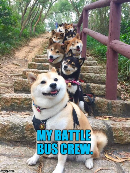 MY BATTLE BUS CREW. | image tagged in doggos | made w/ Imgflip meme maker