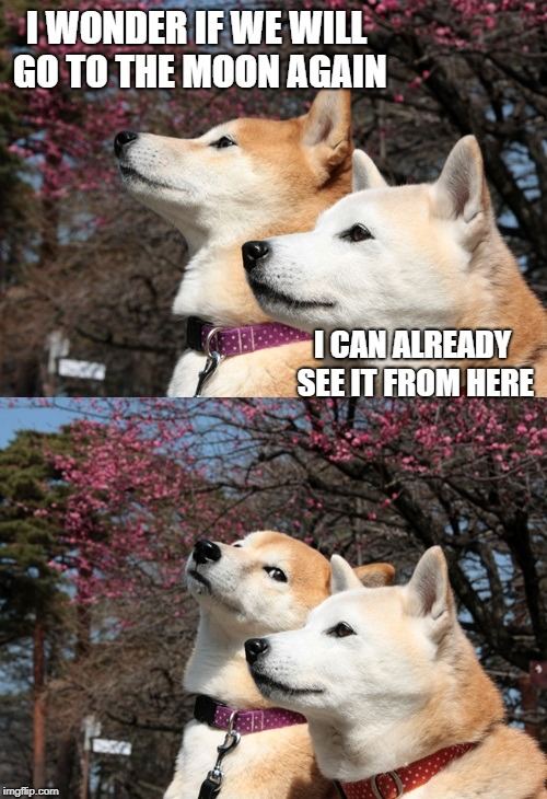 Bad pun dogs | I WONDER IF WE WILL GO TO THE MOON AGAIN I CAN ALREADY SEE IT FROM HERE | image tagged in bad pun dogs | made w/ Imgflip meme maker