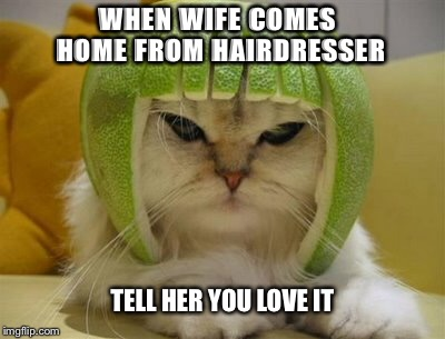 When wife comes home | WHEN WIFE COMES HOME FROM HAIRDRESSER TELL HER YOU LOVE IT | image tagged in funny cat memes,funny cats,silly,wife | made w/ Imgflip meme maker