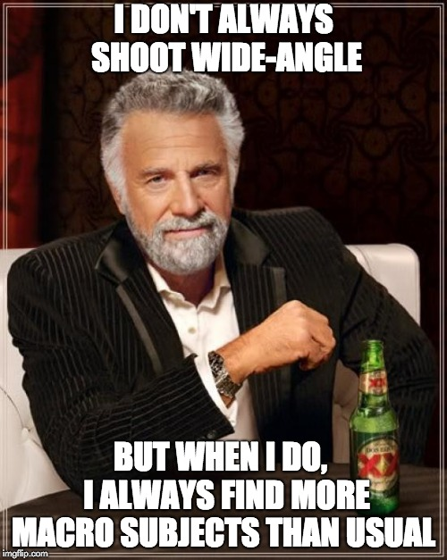 The Most Interesting Man In The World Meme |  I DON'T ALWAYS SHOOT WIDE-ANGLE; BUT WHEN I DO,  I ALWAYS FIND MORE MACRO SUBJECTS THAN USUAL | image tagged in memes,the most interesting man in the world | made w/ Imgflip meme maker