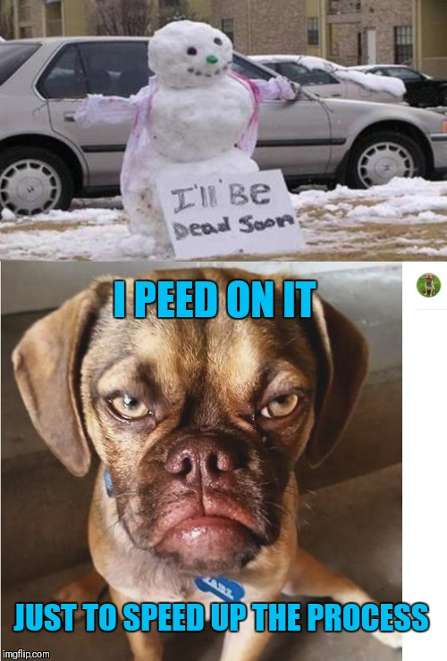 I PEED ON IT JUST TO SPEED UP THE PROCESS | image tagged in grumpy dog | made w/ Imgflip meme maker
