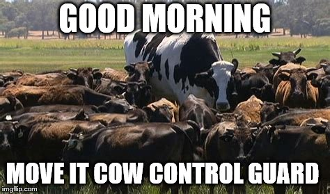 good morning | GOOD MORNING MOVE IT COW CONTROL GUARD | image tagged in cow,control guard,funny memes,meme,memes,funny animals | made w/ Imgflip meme maker