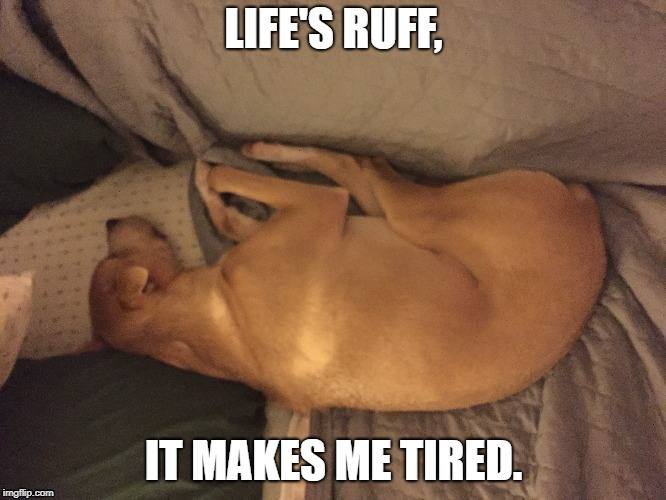 Cookie | LIFE'S RUFF, IT MAKES ME TIRED. | image tagged in dog,cute dog,tired dog,tired | made w/ Imgflip meme maker