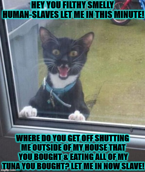 HEY YOU FILTHY SMELLY HUMAN-SLAVES LET ME IN THIS MINUTE! WHERE DO YOU GET OFF SHUTTING ME OUTSIDE OF MY HOUSE THAT YOU BOUGHT & EATING ALL  | image tagged in you filthy human | made w/ Imgflip meme maker